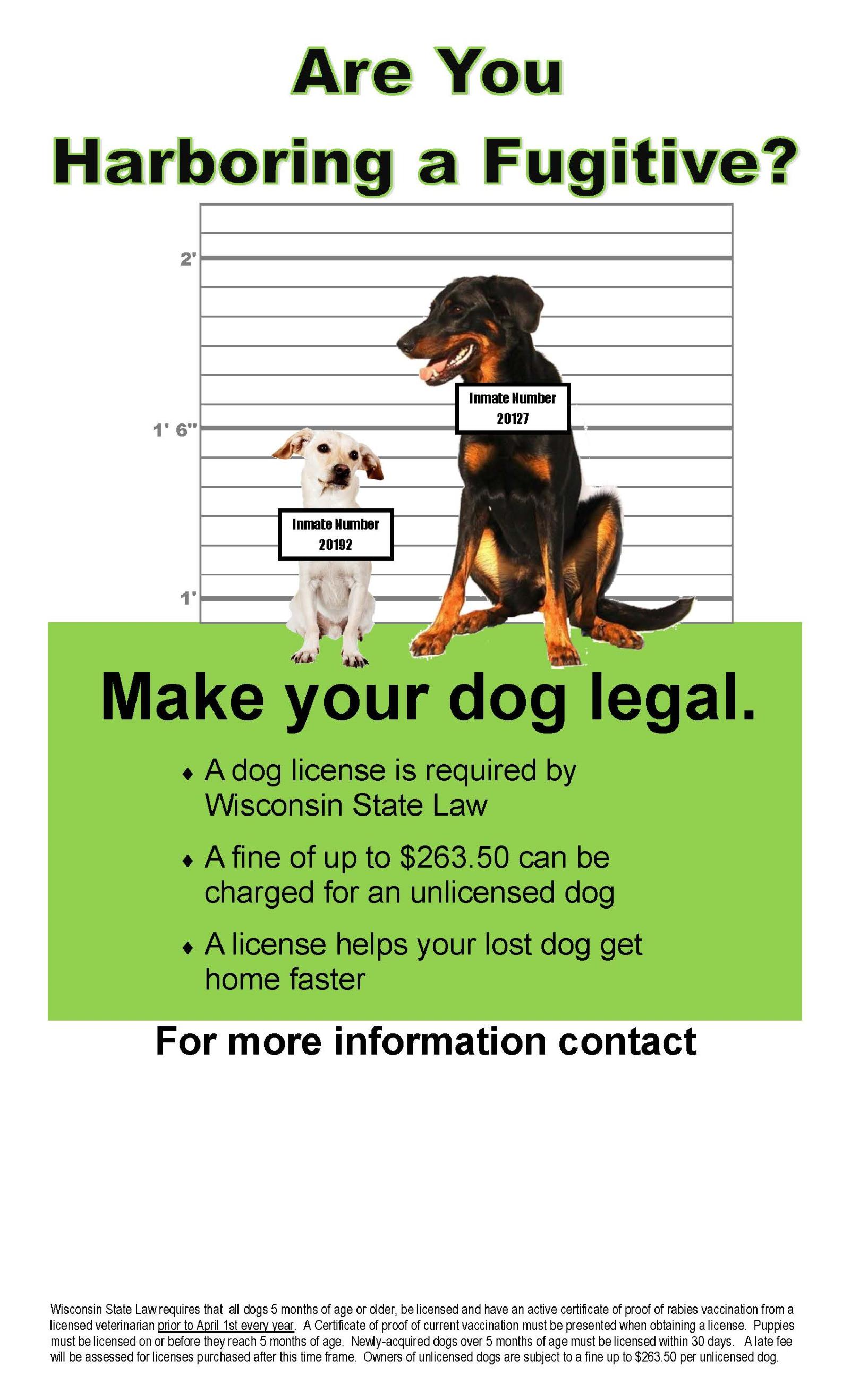 Dog License Posters 1